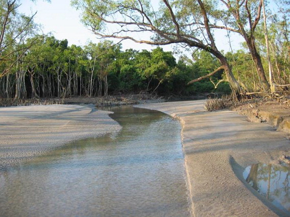 6-009 Pasha Proposal_Typical conditions in the Sundarbans Forest